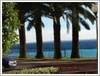 Promenading in Nice (The Nice palm trees have lined the Promenade des Anglais for hundreds of years)