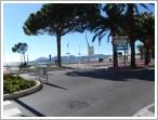 Mature Pines adorn the Croisette in Cannes